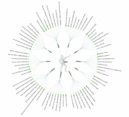 Answer the public gratis SEO tool keywords